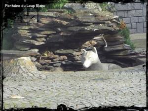Loup blanc2